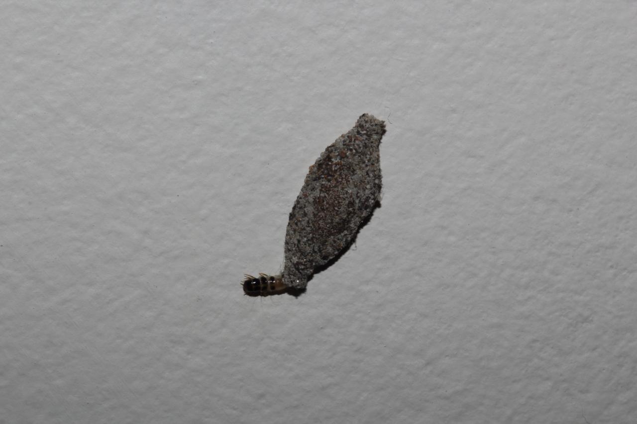 Uma tra a em pleno 2012 piter dias - Humedades en las paredes ...