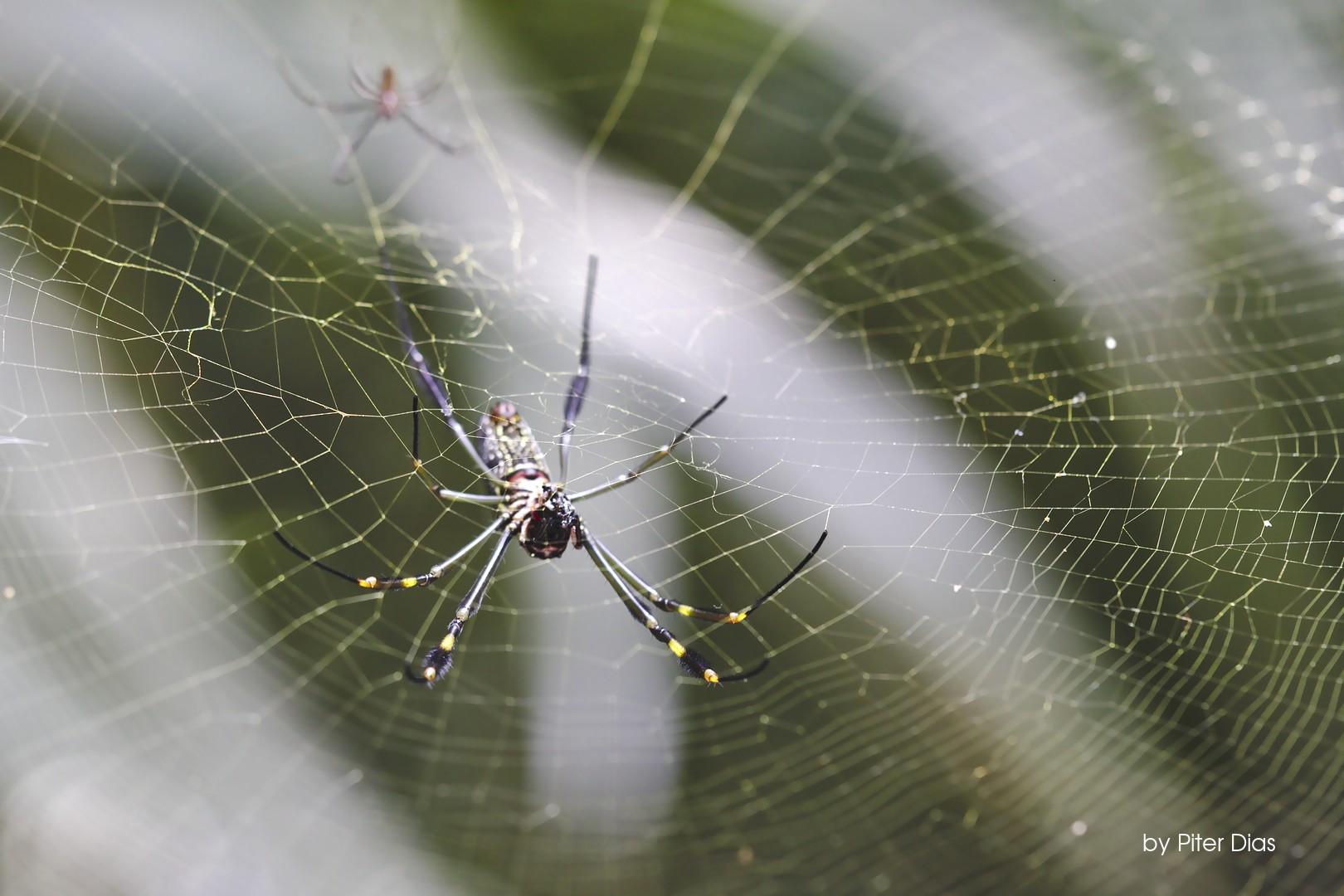 Aranhas – Liberdade no Parque Trianon